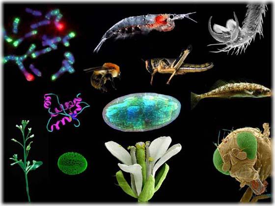 biologyimages67