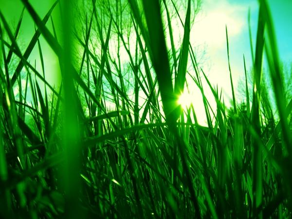 grass-29oaifv