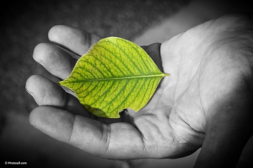 hand_holding_green_leaf_sjpg4986