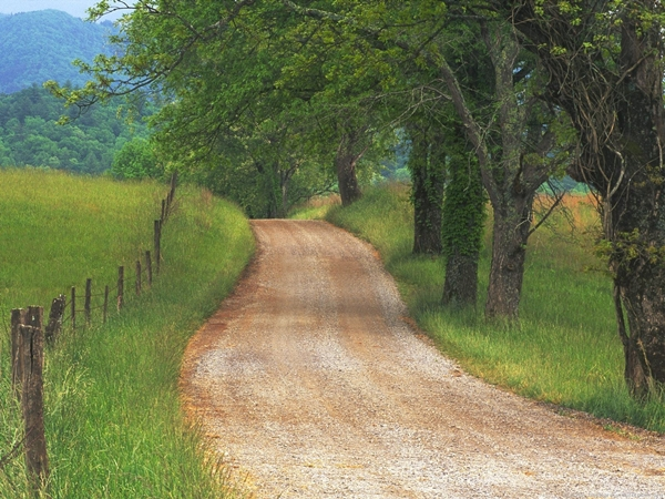 country_road_through_cades_cove_great_smoky_mountains_tennessee