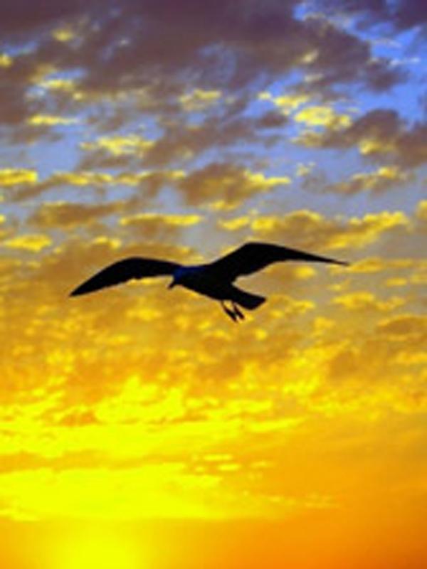 bird-in-flight-dw