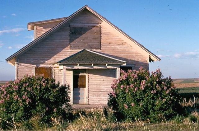 lilacs-and-farmhouse-1974