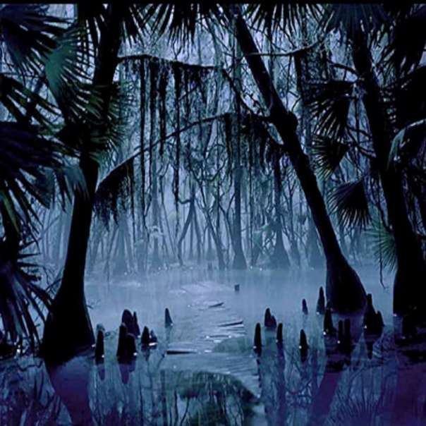night-swamp
