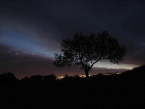 night_prairie_tree_by_redice555