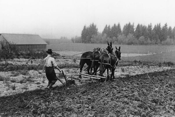 Plowing_in_1931_(Beaverton,_Oregon_Historical_Photo_Gallery)_(278)