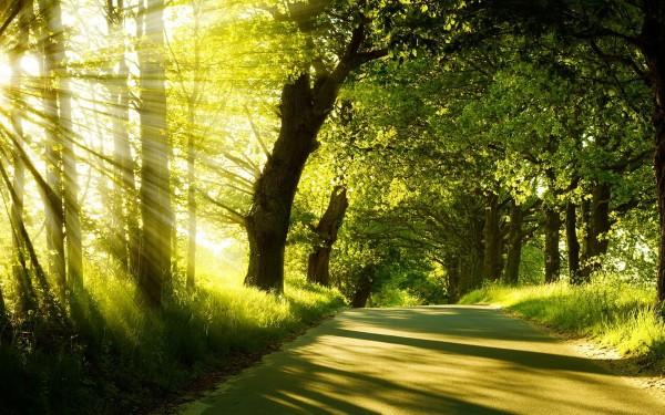 summer-nature-sunshine-wallpapers_555734915
