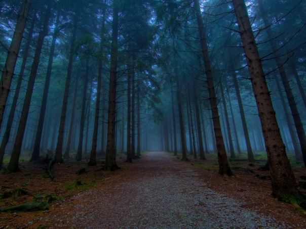 1299649558_1024x768_dusk-forest