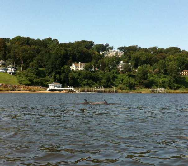 dolphin-4-083012