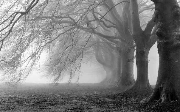 6939771-morning-mist